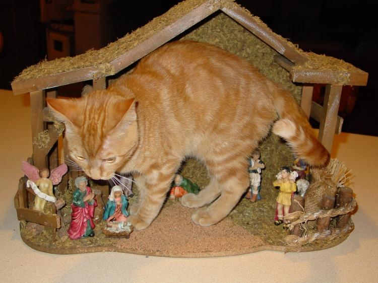 cat in a manger secene