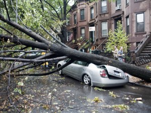 tree tornado